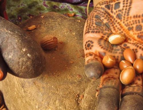 超詳細摩洛哥堅果油成分、功效、使用方法與摩洛哥堅果油選購推薦!